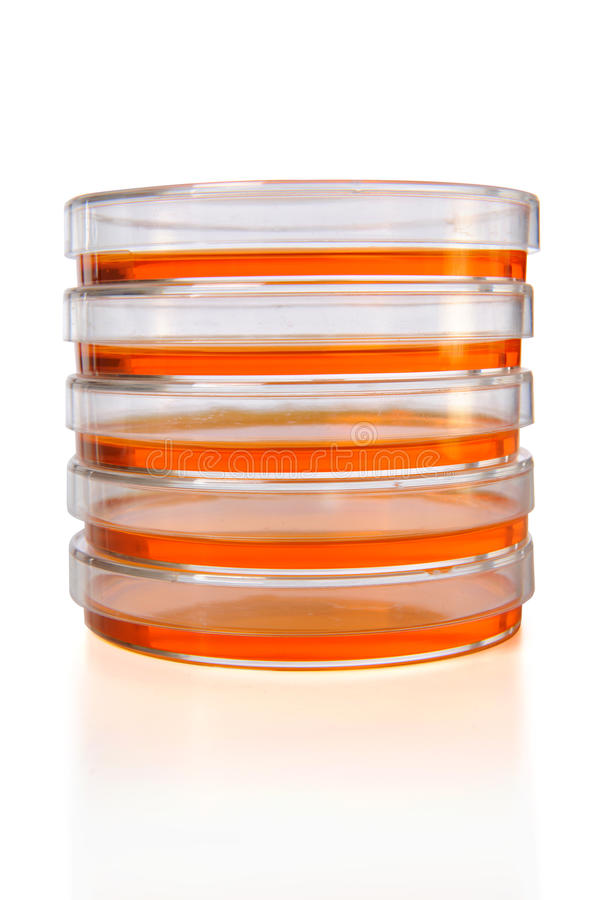 Download Stack of Petri Dishes stock photo. Image of experiment - 15875042