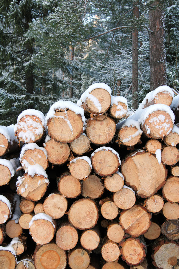 Download Stack Of Pine Logs In Winter Snow Stock Photo - Image: 22771724