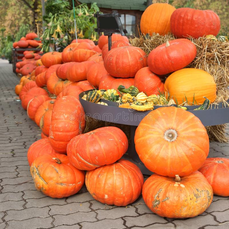 Stack of Pumpkins, Halloween stock photography