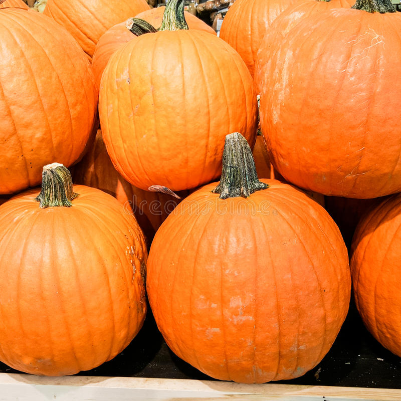 A stack of pumpkins stock images