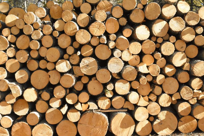 Stack of recently cut pines royalty free stock photo