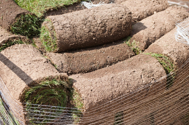 Stack of rolled grass sod. For gardening stock photo