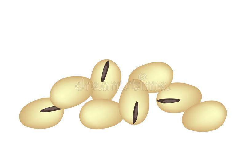 A Stack of Soybeans on White Background. Vegetable and Fruit, A Pile of Yellow Soybean or Edamame, Good Source of Dietary Fiber, Vitamins and Minerals vector illustration