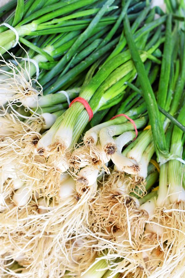 Bunch of fresh green onion at the market royalty free stock photos
