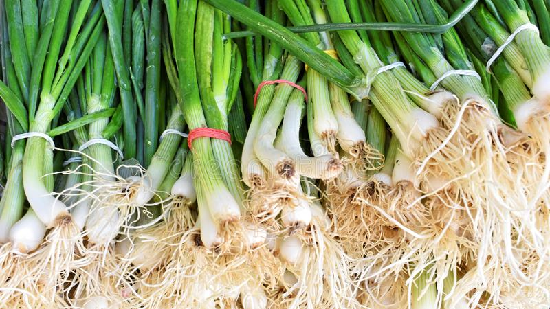 Bunch of fresh green onion at the market royalty free stock photo