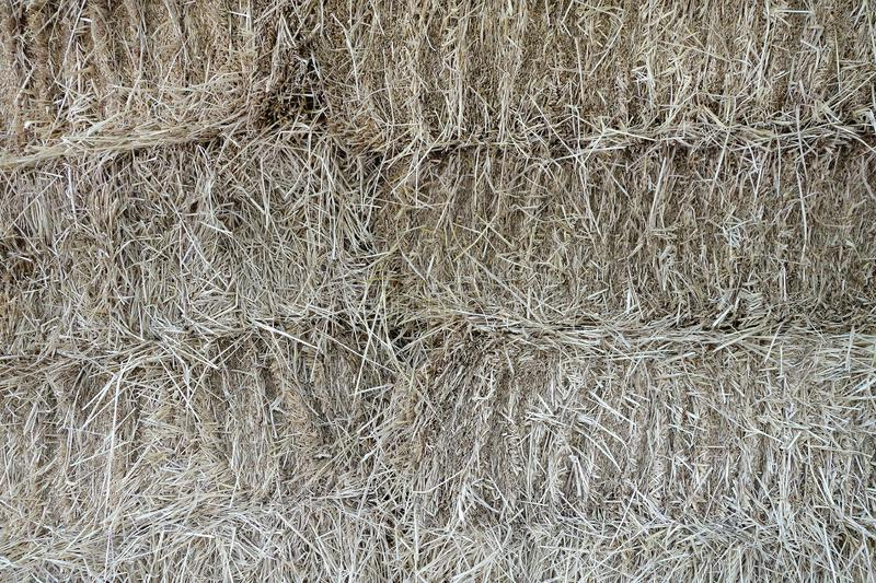 Stack of straw in cattle farm, close up dried grass pile for use as fodder. Hay preparation for horses or dairy cows, abstract agricultural background stock image