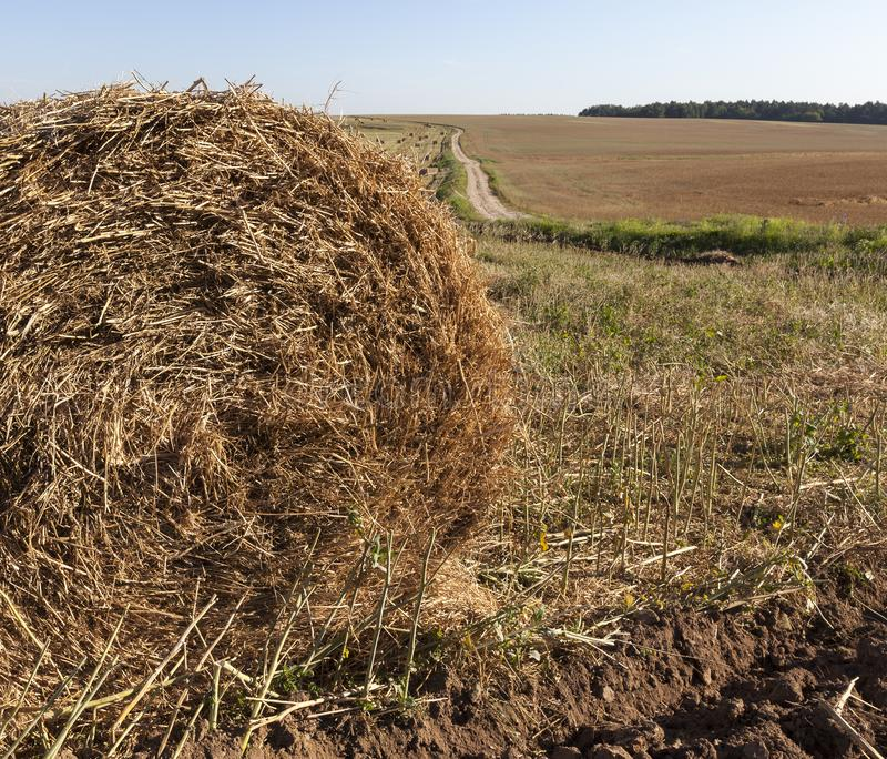 stack of straw stock photo
