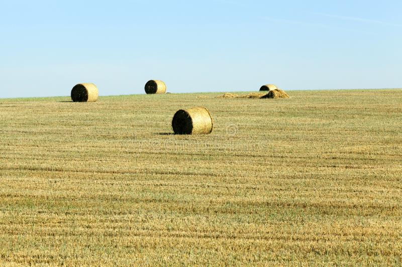 stack of straw stock images