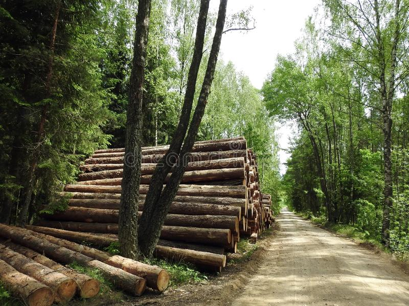 Stack timber in forest, Lithuania stock images