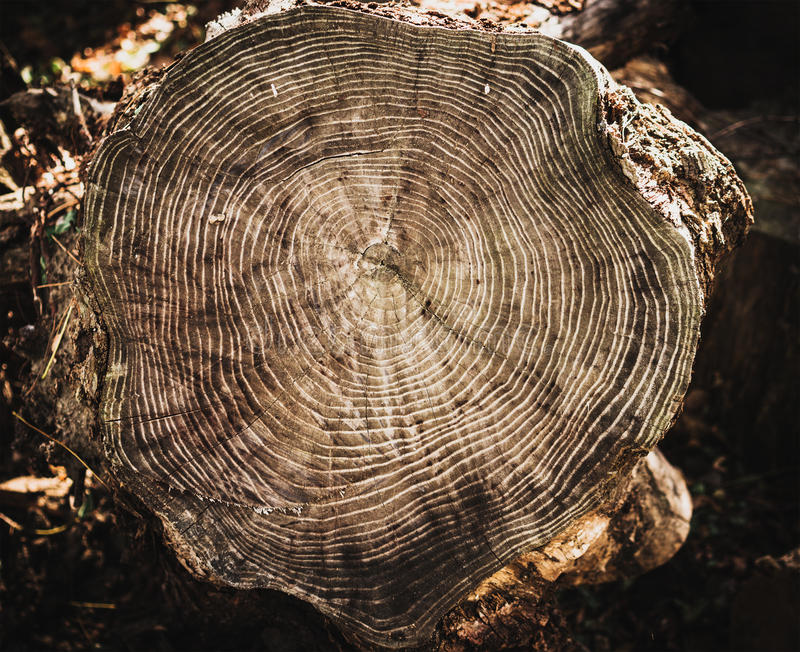 Stack of tree stump for background. Close up stock photo
