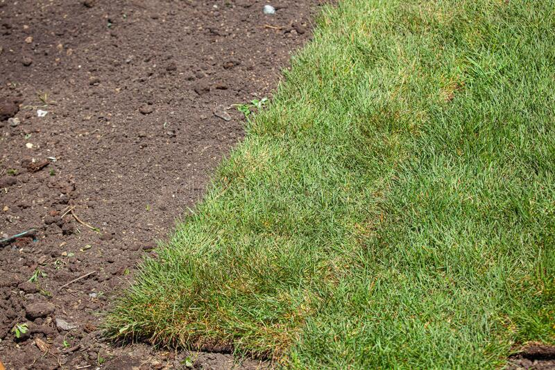 Stack of turf grass roll for lawn royalty free stock image