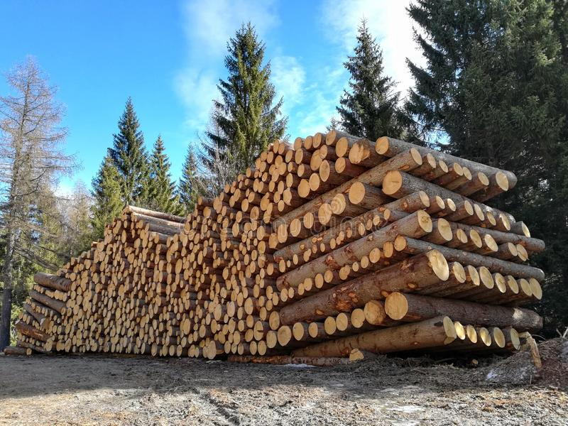 Wood cut from the forest and stacked. Stack wood cut forest stacked stock image