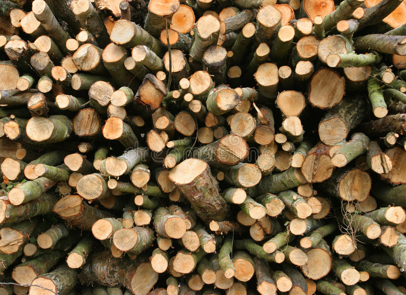 Download Stacked Logs stock photo. Image of bark, ends, timber, drying - 102020