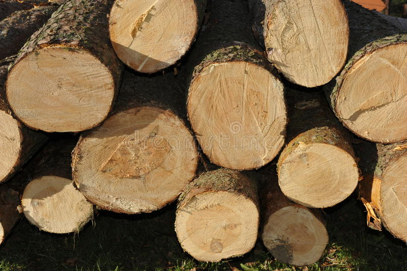 Download Stacked Logs stock image. Image of trunk, natural, forest - 21934297