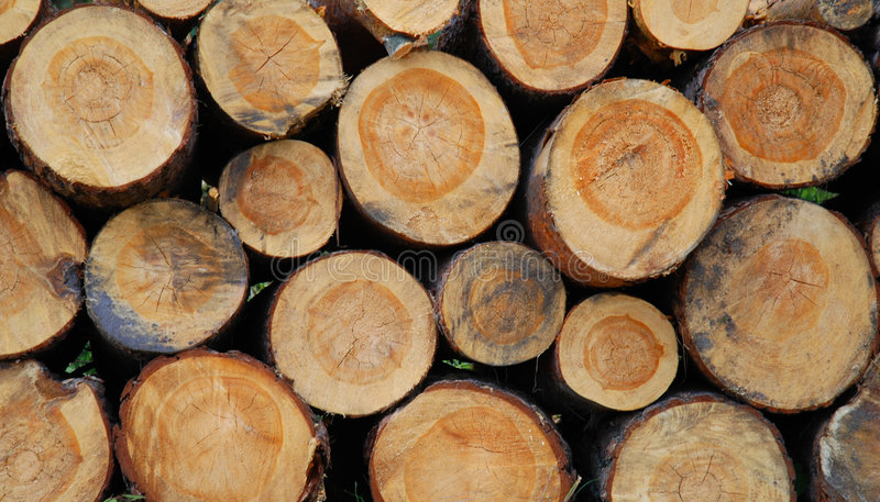 Download Stacked Logs Stock Photo - Image: 6962170