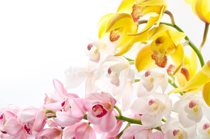 Stacked orchid flowers stock image