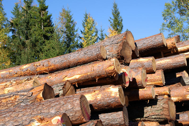 Download Stacked Pine Logs With Blue Sky Stock Image - Image: 16252335