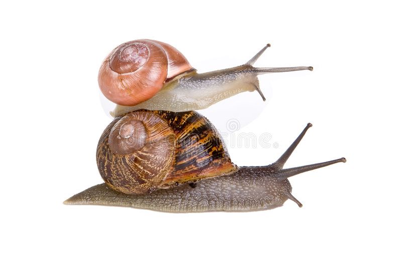 Stacked snails royalty free stock photography