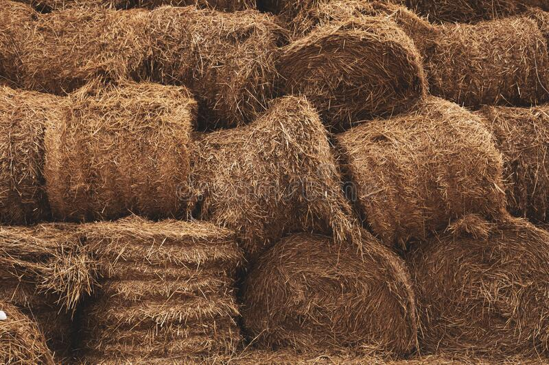Stacked Straw Hay Bails Background.  royalty free stock image