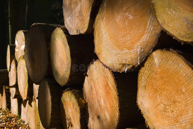 Stacked timber logs stock photography