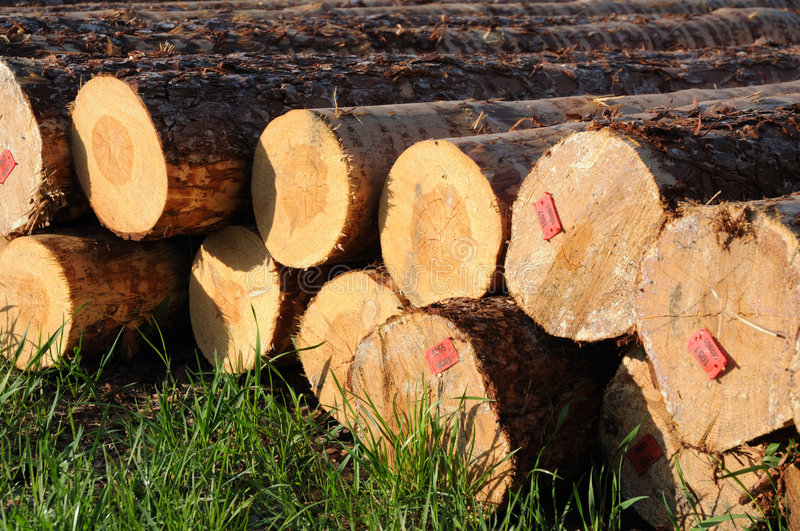 Stacked timber logs royalty free stock image