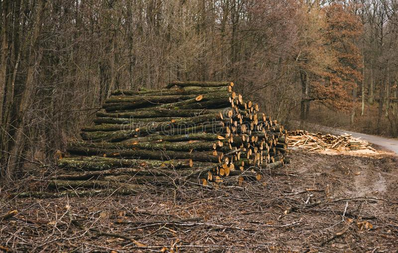 Stacked wood logs in forest on sunny day. Heap of wood oak, beech, pine with path on background. Photo of many raw tree trunks stock photo