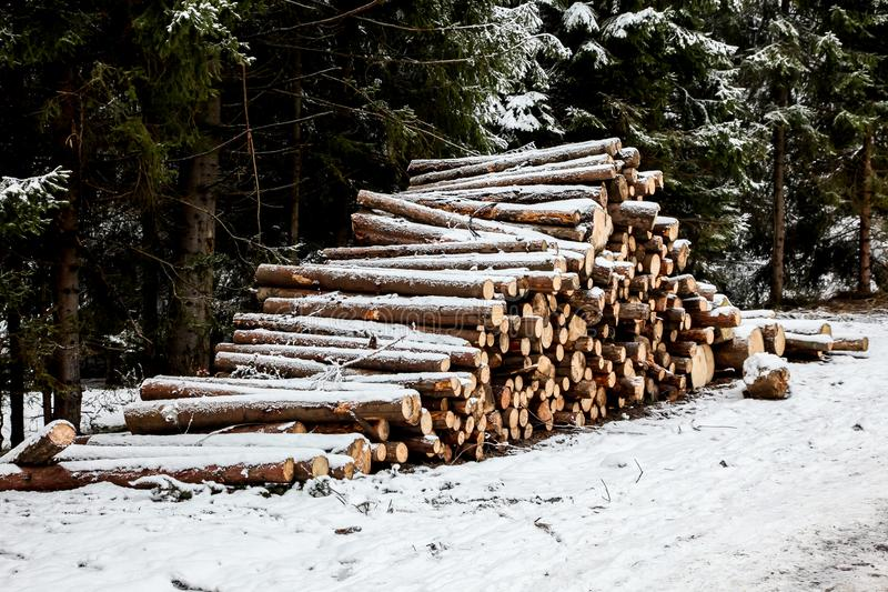 Stacked wood in winter. Land royalty free stock photography