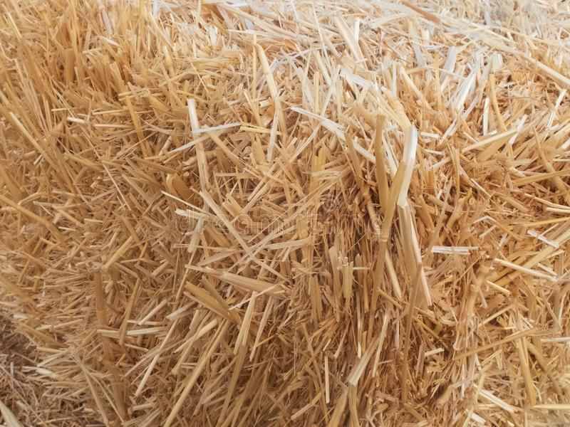 Stacks of dry straw. Piled straw haystacks. Natural dry straw texture background stock photography