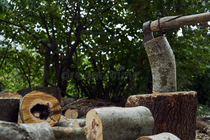 Stacks of firewood in the forest, close-up. royalty free stock photography