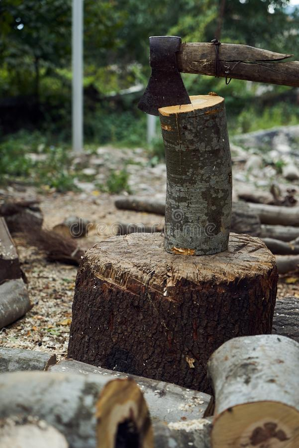 Stacks of firewood in the forest, close-up. royalty free stock photo