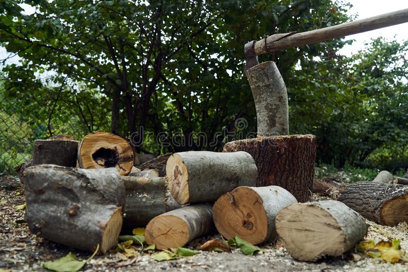 Stacks of firewood in the forest, close-up. royalty free stock images