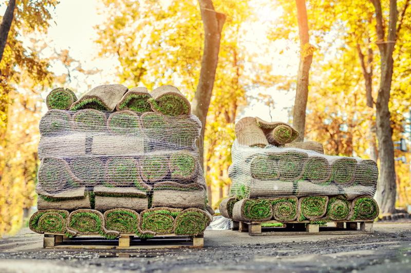 Stacks of green fresh rolled lawn grass on wooden pallet at dirt prepared for installation at city park or backyard in autumn. royalty free stock image
