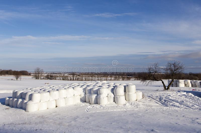 Stacks of hay bale rolls wrapped in plastic seen in rural area during an early winter sunny morning. Saint-Augustin-de-Desmaures, Quebec, Canada royalty free stock images