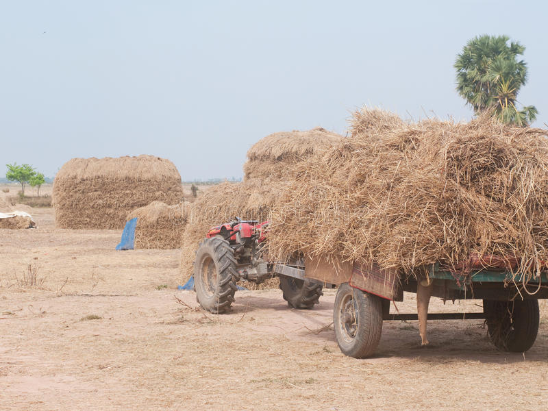 Download Stacks of hay in Cambodia stock image. Image of rural - 21951869