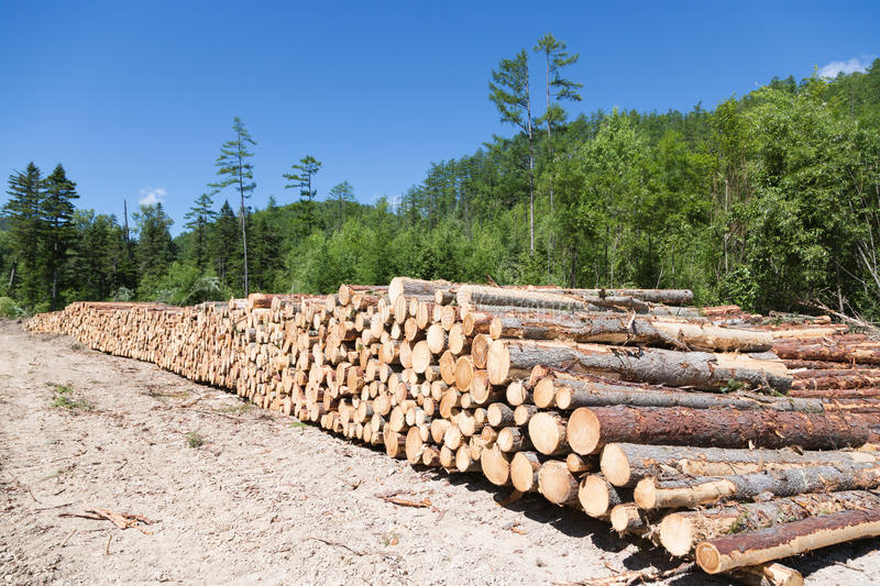Stacks of logs at a forest logging site royalty free stock photo