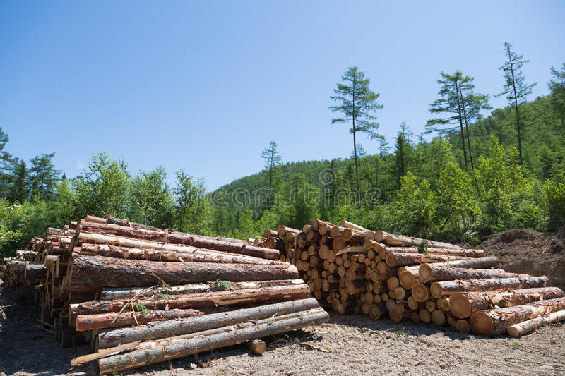 Stacks of logs at a forest logging site royalty free stock photos