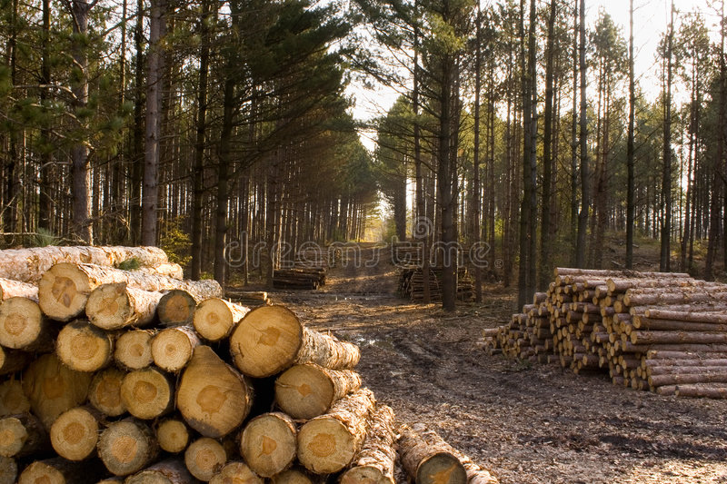 Stacks Of Pulp Logs royalty free stock photo