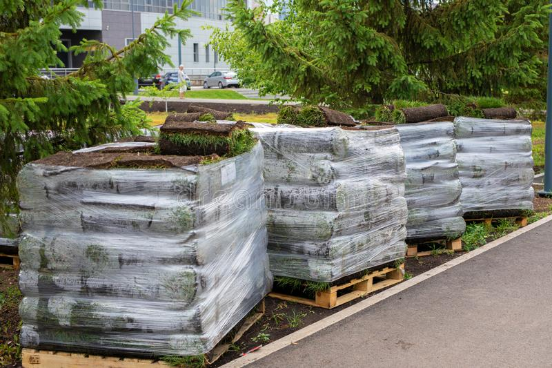 Stacks of sod rolls for lawn for landscaping. Lawn grass in rolls on pallets. rolled grass lawn is ready for laying. Stacks of sod rolls for new lawn for royalty free stock images