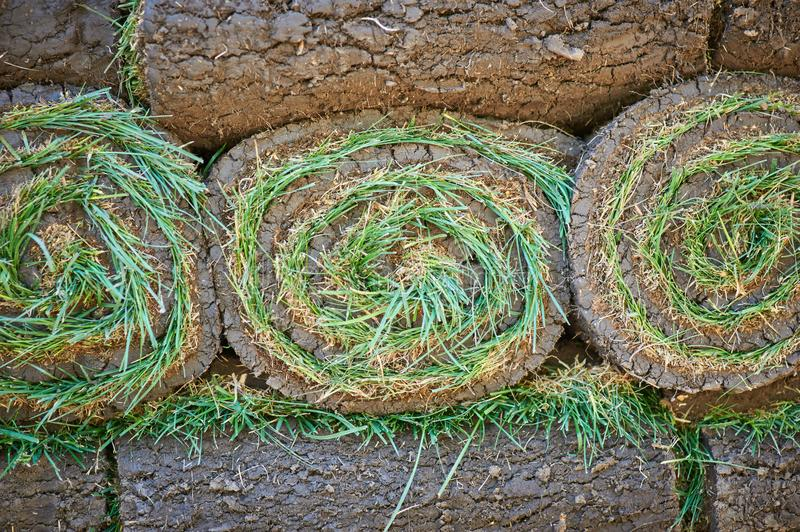 Stacks of sod rolls for new lawn royalty free stock image