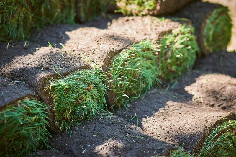 Stacks of sod rolls for new lawn. Background stock images