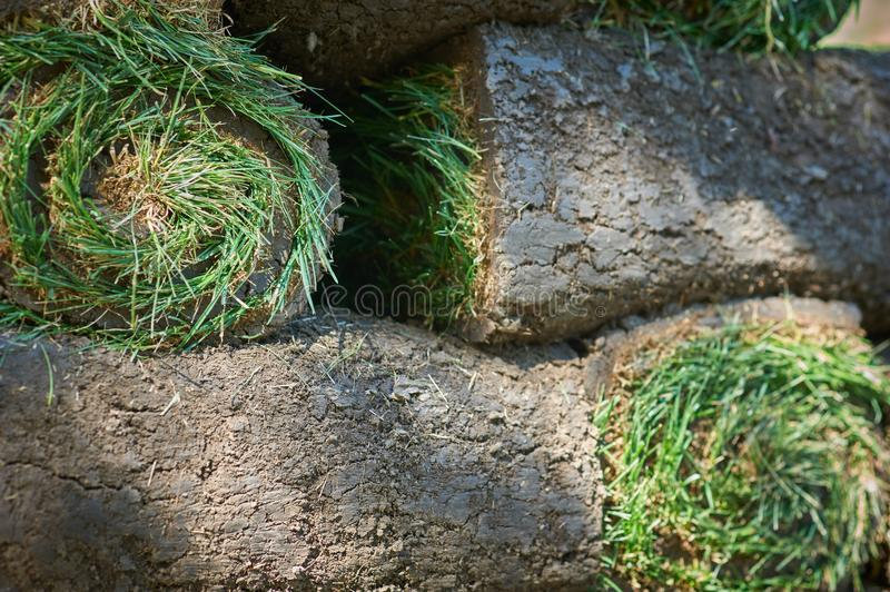 Stacks of sod rolls for new lawn. Background stock image
