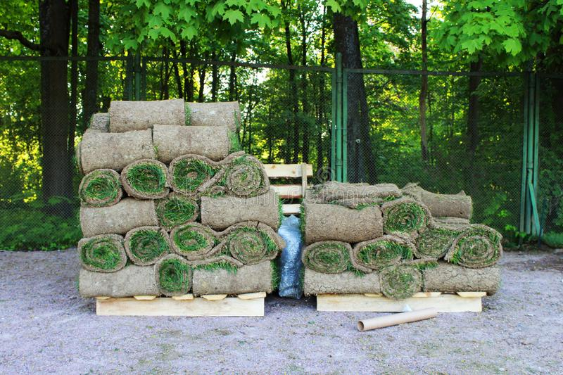stacks of sod rolls for new lawn in the Gatchina park. stock photo