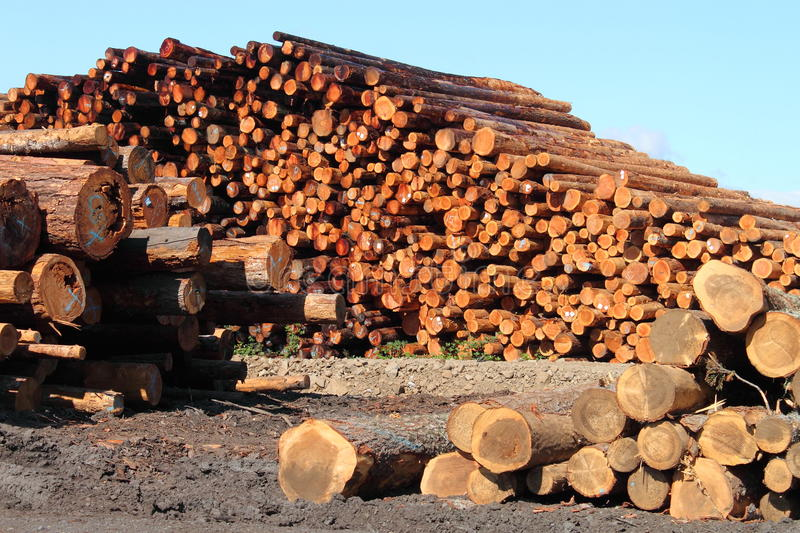 Stacks of Timber royalty free stock photography