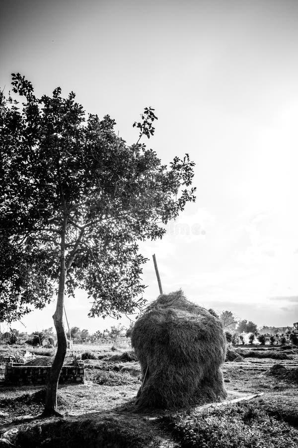 Stacts соломы стоковая фотография rf