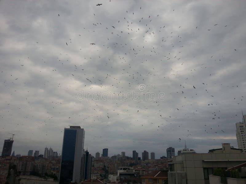 Stad av fåglar royaltyfria foton
