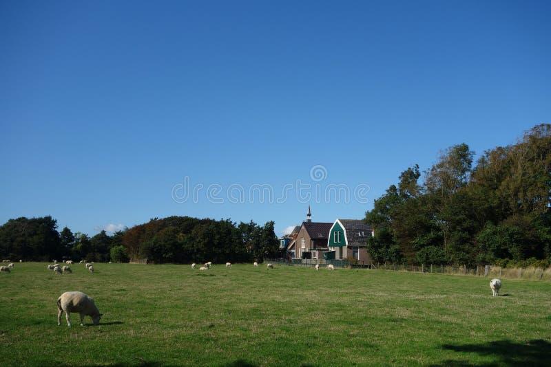 Stad in Holland met kerk stock foto