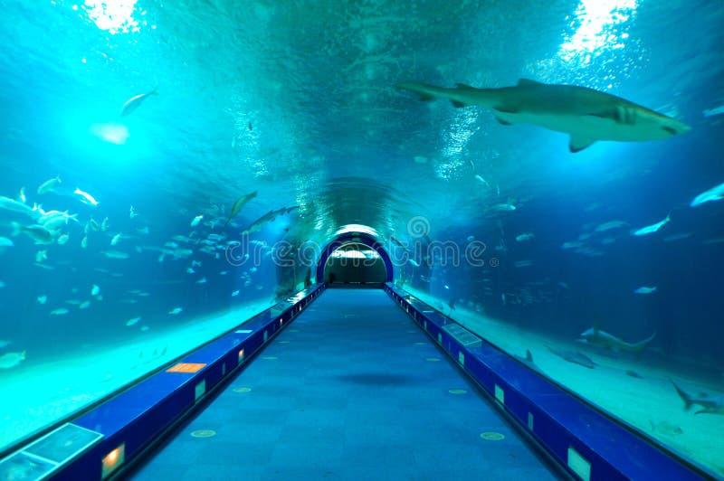 Stad van Kunsten en het aquarium van de Wetenschap in Valencia royalty-vrije stock foto's