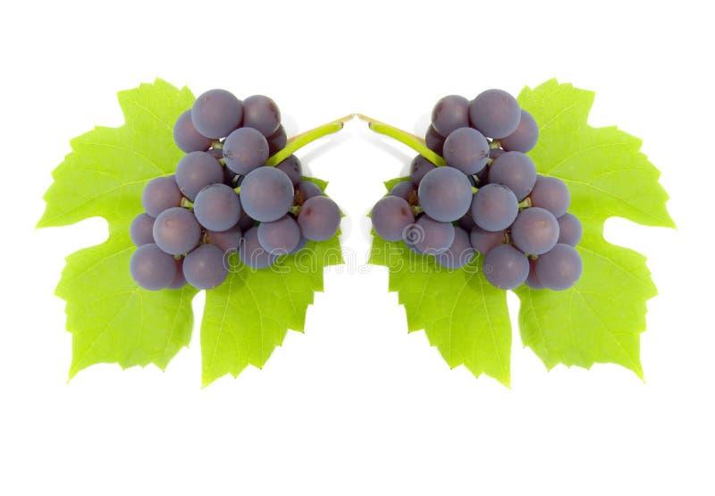 stad z winogron zdjęcie royalty free
