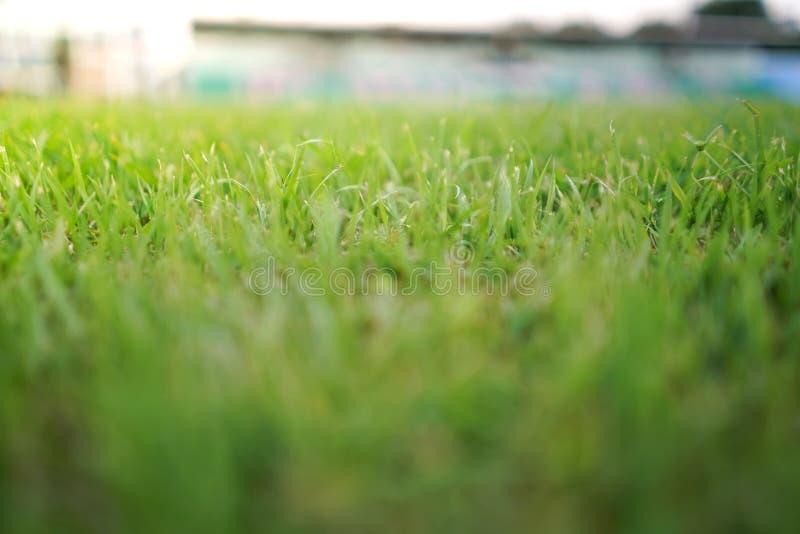 Stade sportif de verdure photographie stock