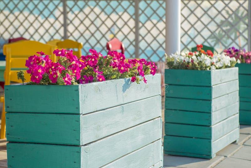Staden blommar i de stora träkrukorna på gatan Inre gatakafé med blommor i träkruka Landskap och garnering av staden royaltyfri fotografi
